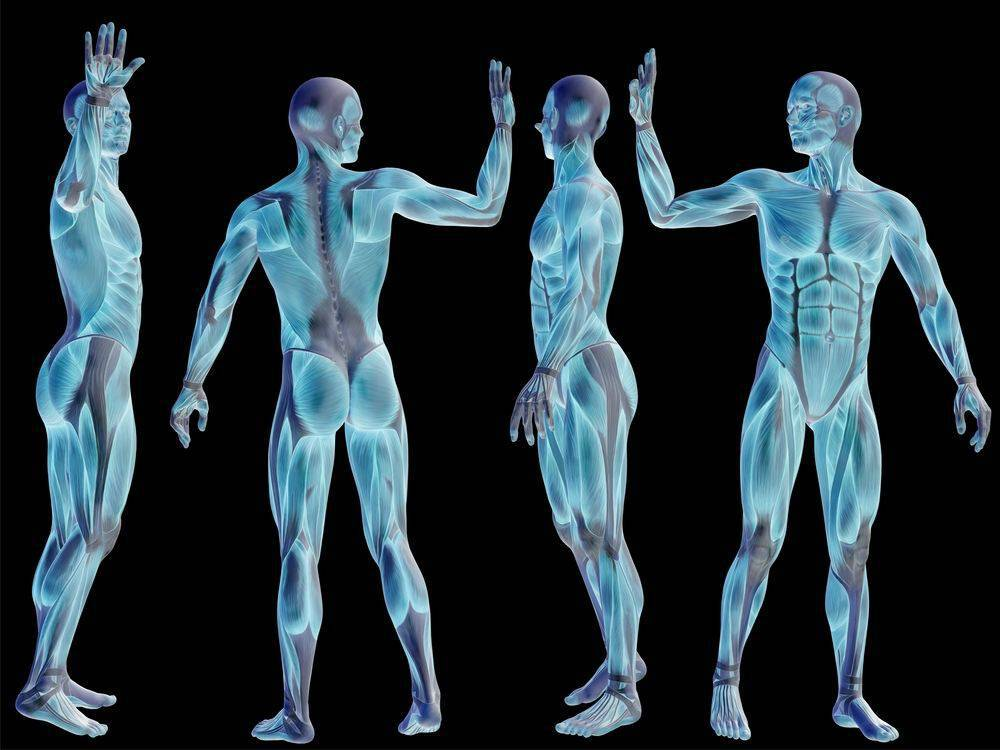 human body small