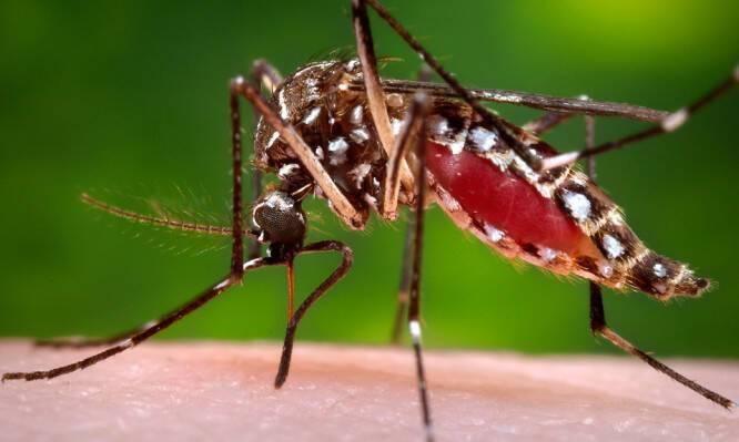 Μπορούν τα κουνούπια να μεταδώσουν τον ιό HIV;