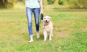 bigstock-Owner-With-Golden-Retriever-Do-117695129