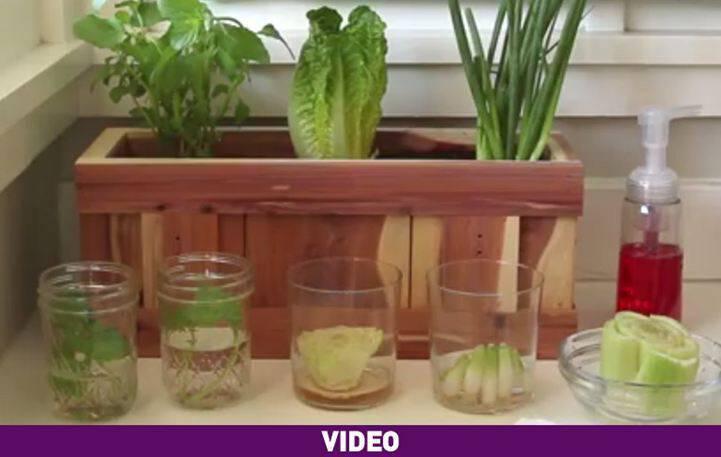 Καλλιεργήστε τα δικά σας λαχανικά από τα υπολείμματα τους εύκολα και γρήγορα