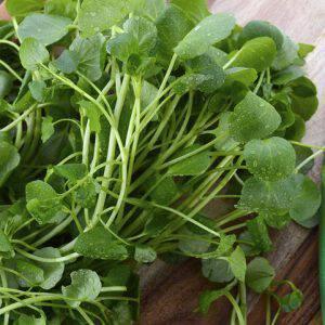 bigstock-Watercress-Salad-Ingredient-107985224