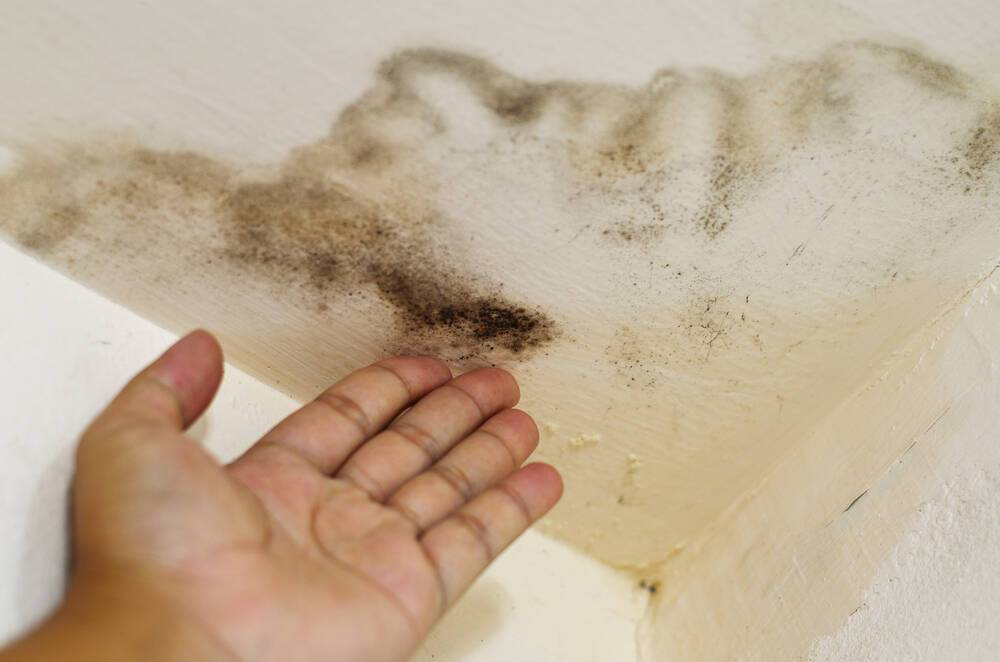 Συμπτώματα υγείας που δείχνουν πρόβλημα με μούχλα στο σπίτι – Όλα τα σημάδια