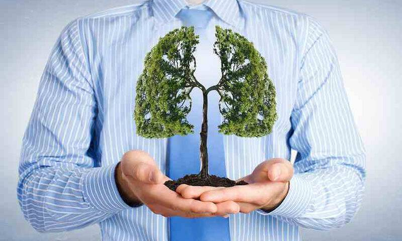 bigstock-Lungs-shaped-tree-in-palms-as-99062684